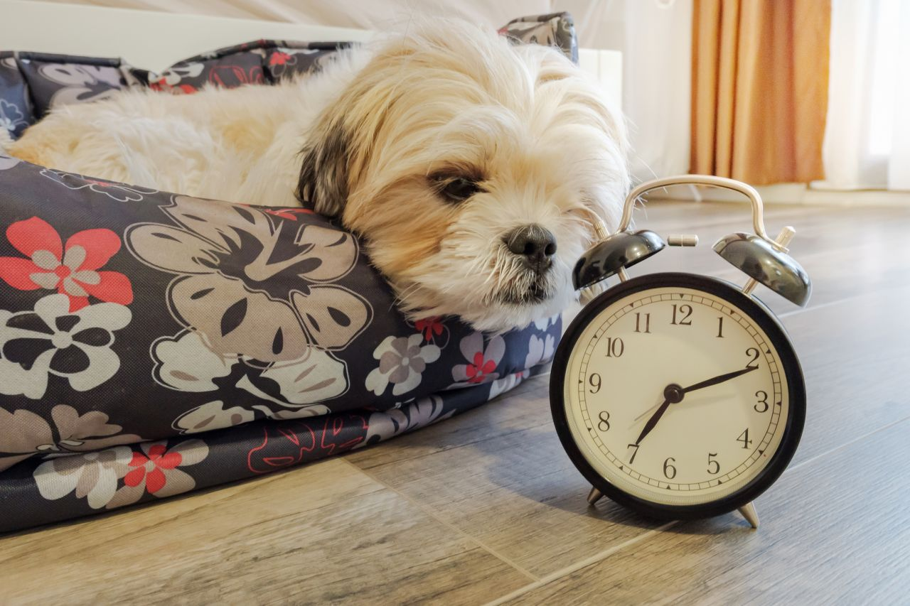 Does Your Dog Hate Daylight Saving Time?