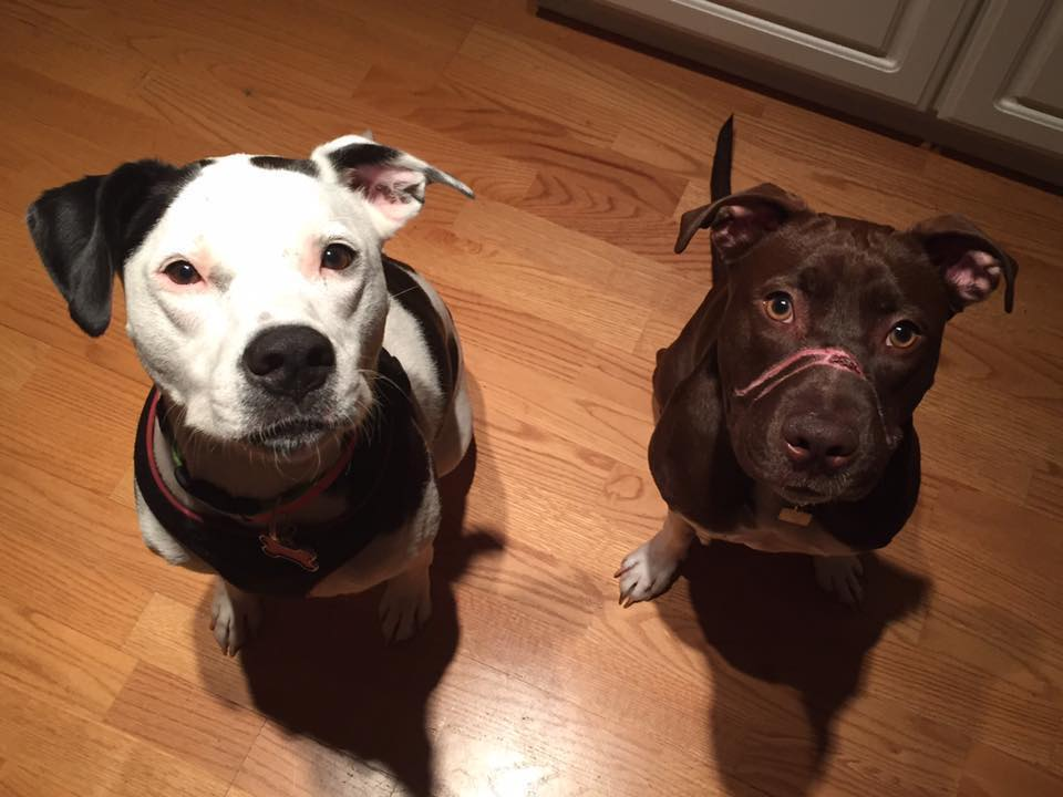 Caitlyn and Her Foster Brother Oreo
