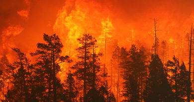 Wildfires and your risk